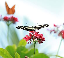 Butterfly I by picsbytabitha