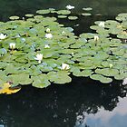 Water lillies - Hyde Park by corrado