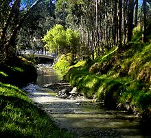 The Beauty Of Cumanda Creek In Cuenca by Al Bourassa