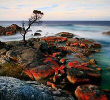 Binalong Bay Tasmania by Angelika  Vogel