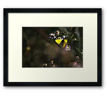 Yellow Green and Everything Inbetween Framed Print