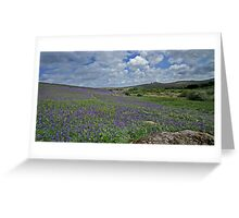 Bluebells on Holwell Lawns, Dartmoor Greeting Card