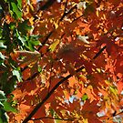 Autumn Colours - Contrast by goddarb