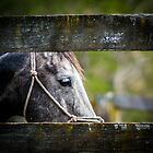 Equines in front of my Camera by CJO Photography by Candice O'Neill