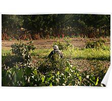 Ecuadorian Farmer in a Field Poster