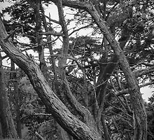 Baker Beach Trees 2 by Andrew O'Hara
