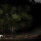 White horse by Danzo