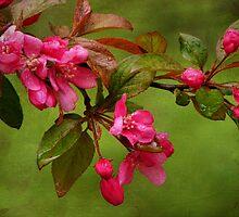 Cherry Blossom Branch by PineSinger