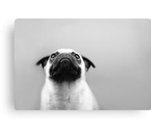 Pug Black and White Canvas Print