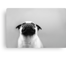 Pug Black and White Canvas Print