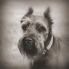 Bearded Dog by Mickey Harkins
