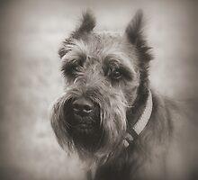 Bearded Dog by Mickey Harkins