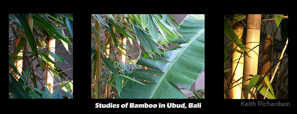 Studies of Bamboo in Ubud, Bali by Keith Richardson