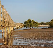 Mangrove Boardwalk_Urunga by Sharon Kavanagh