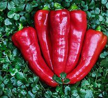 Carmen Peppers On Potentilla by heatherfriedman
