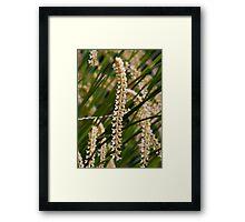 Dendrochilum tenellum 'Robert' (Spike) Framed Print
