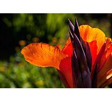 Blazing orange Photographic Print