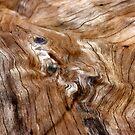 bois liquide by yvesrossetti