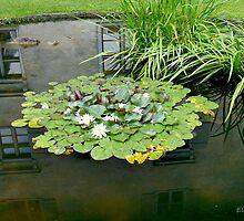 A Platter of Waterlilies by Ellanita