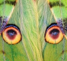 Eyespots by jimmy hoffman