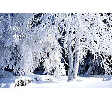 Winter in the Black Forest  Photographic Print