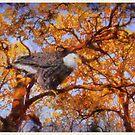 Visiting Eagle by Linda Miller Gesualdo