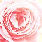 Scent Of A Rose by Samantha Higgs