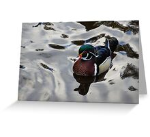 Wood Duck on Silver Greeting Card