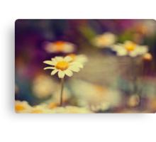 buttercup daisies Canvas Print