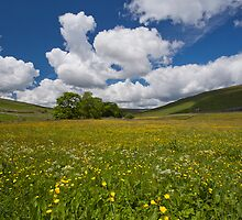 Flower meadow in Littondale by Judi Lion