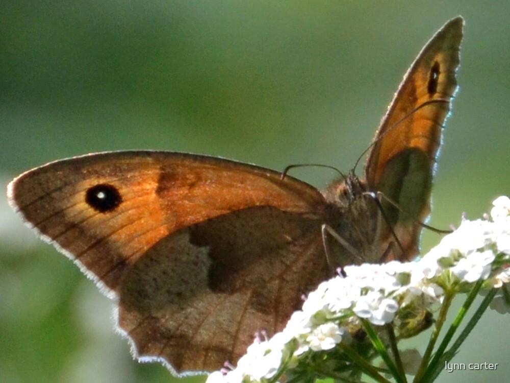 Meadow Brown Butterfly by lynn carter