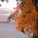 Lake Champlain - sunset with Popular tree - 9.24.2013 by Nadia Korths