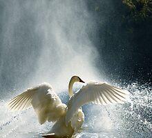 Water Mist Bathing by Igor Zenin