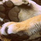 Tiger Paws by Susannah Kotyk