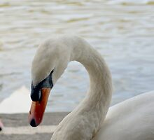I'm Behind You! by Carol Bleasdale