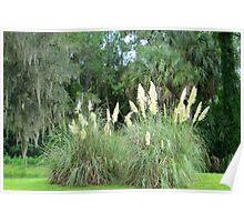 Florida Greenery Poster