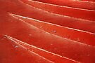 Red Steps abstract by Laurie Minor