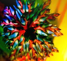 Bromeliad color wheel by ♥⊱ B. Randi Bailey