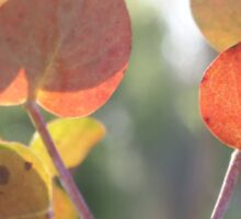bush colours Sticker