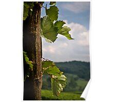 Linden Vineyards 2 Poster