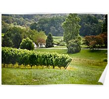 Linden Vineyards 4 Poster