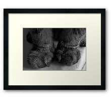 My! What big paws you have! Framed Print