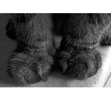 My! What big paws you have! Photographic Print