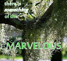 Something Marvelous by Paula Tohline  Calhoun