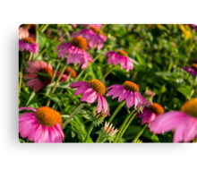 Coneflowers 7 Canvas Print