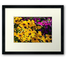 Yellow Conflowers Framed Print