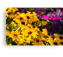 Yellow Conflowers Canvas Print