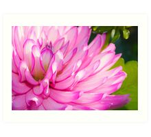 Pink and Purple Flower Art Print