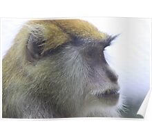 Monkey on Lookout Poster