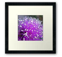 Melaleuca Nesophila Macro Framed Print